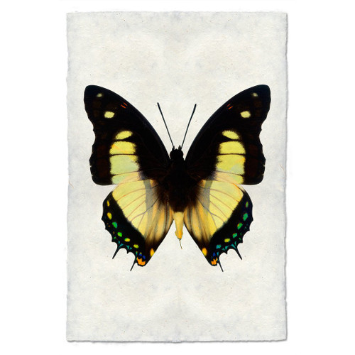 Butterfly Print #5