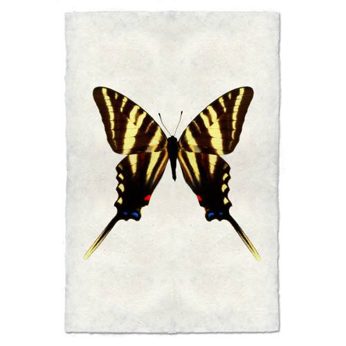 Butterfly Print #6