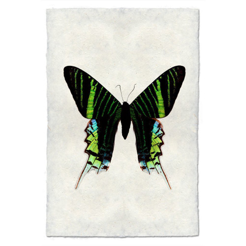 Butterfly Print #7