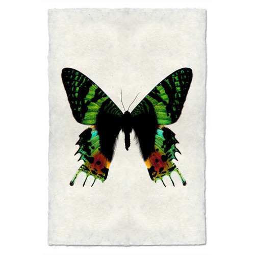 Butterfly Study Print #8