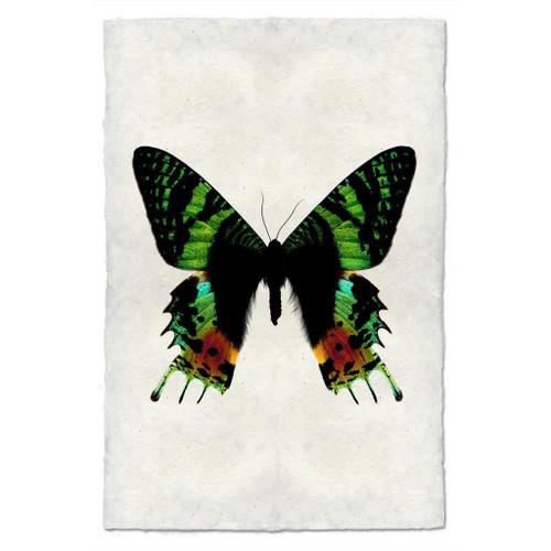 Butterfly Study Print #8