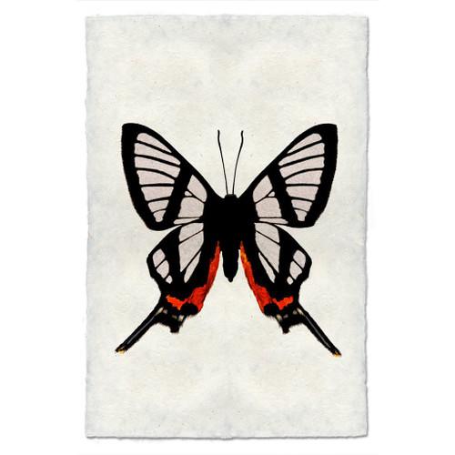 Butterfly Study Print #9