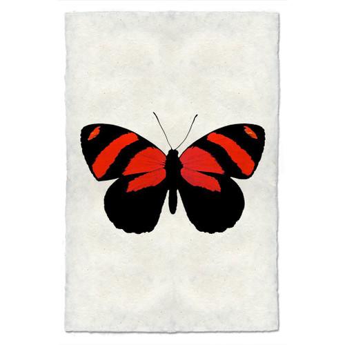 Butterfly Study Print #10
