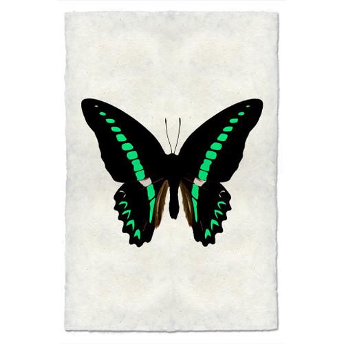 Butterfly study print #11