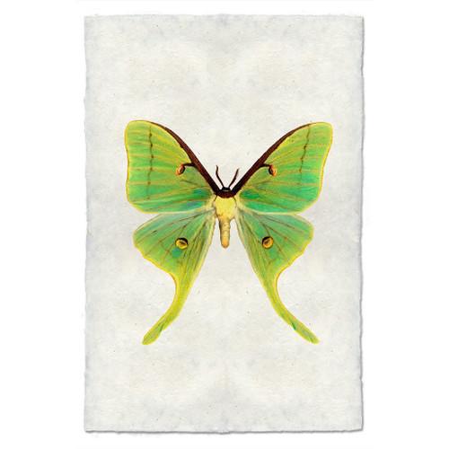 Butterfly Papilionoidea Study Print #3