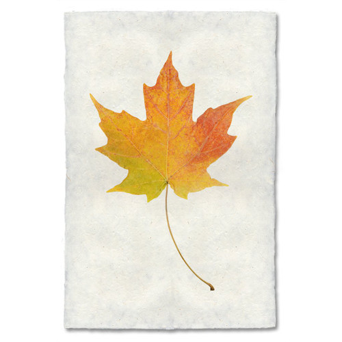 Maple Leaf Study Print