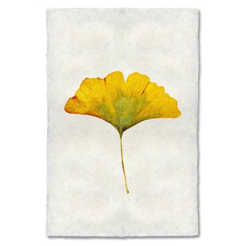 Ginkgo Leaf Study Print