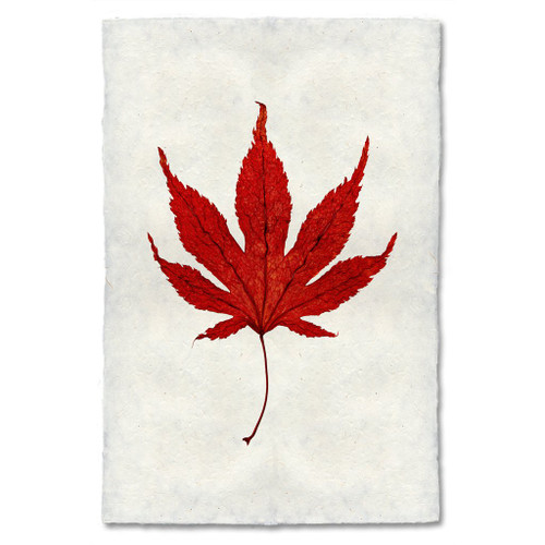 Japanese Maple Leaf Study Print