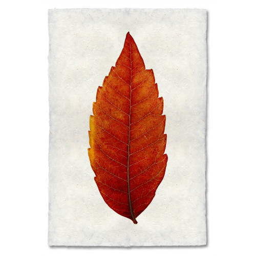Sumac Leaf Study Print