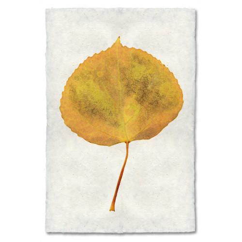 Aspen Leaf Study Print