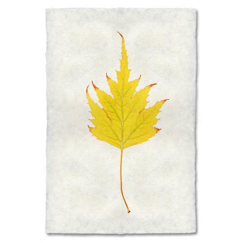 Birch Leaf Study Print
