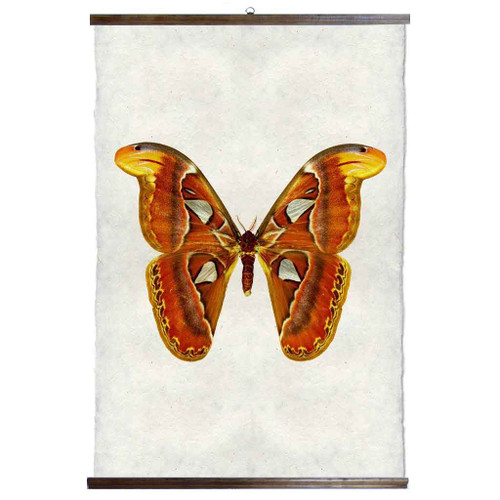 Grand Format Papilionoidea #2 Print with wood Hanger