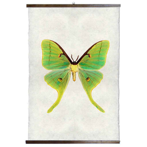 Grand Format Papilionoidea #3 Print with wood Hanger