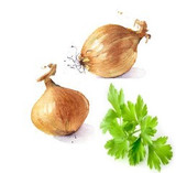 Cilantro & Onion Infused Olive Oil