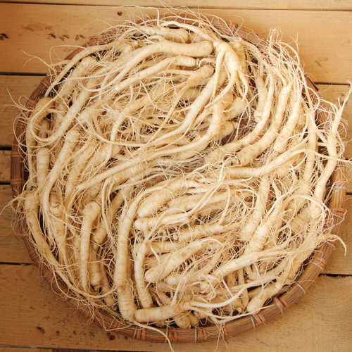 *Seasonal* LARGE Fresh Ginseng (5 year old) - (20 lbs Bag)