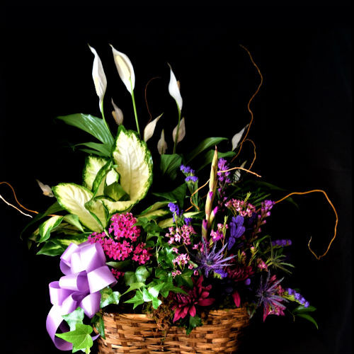 PLANTS & GARDEN BASKETS