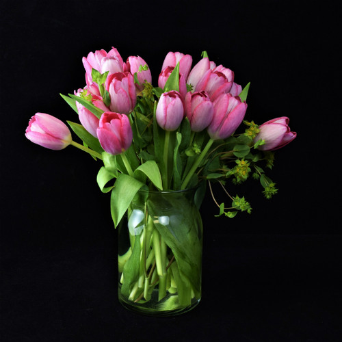 ODE TO TULIPS