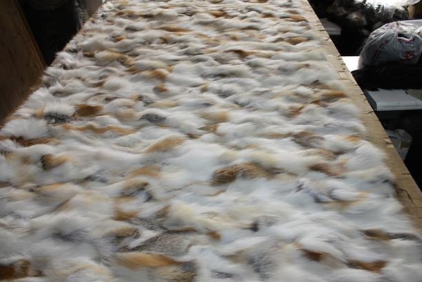 Golden Island Fox  Sectional Fur Plate