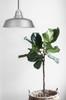 Goodyear LED Pendant Light in Galvanized Silver