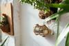Ceduna Nautical Bulkhead Light in Brass (AM-F440-BR) lifestyle