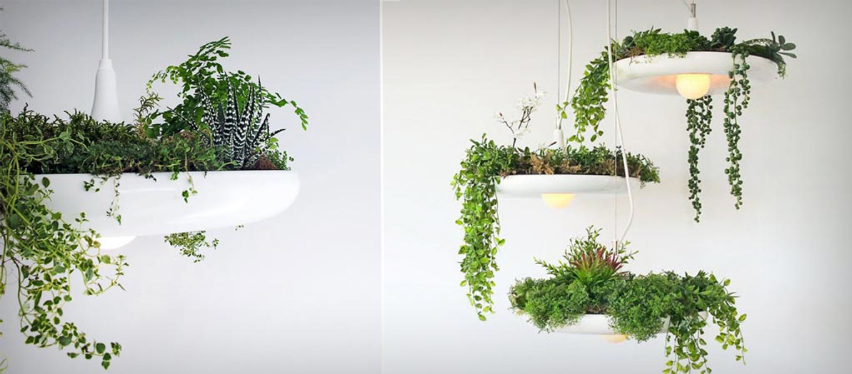 How To Use Plants With Lighting When Decorating Your Home