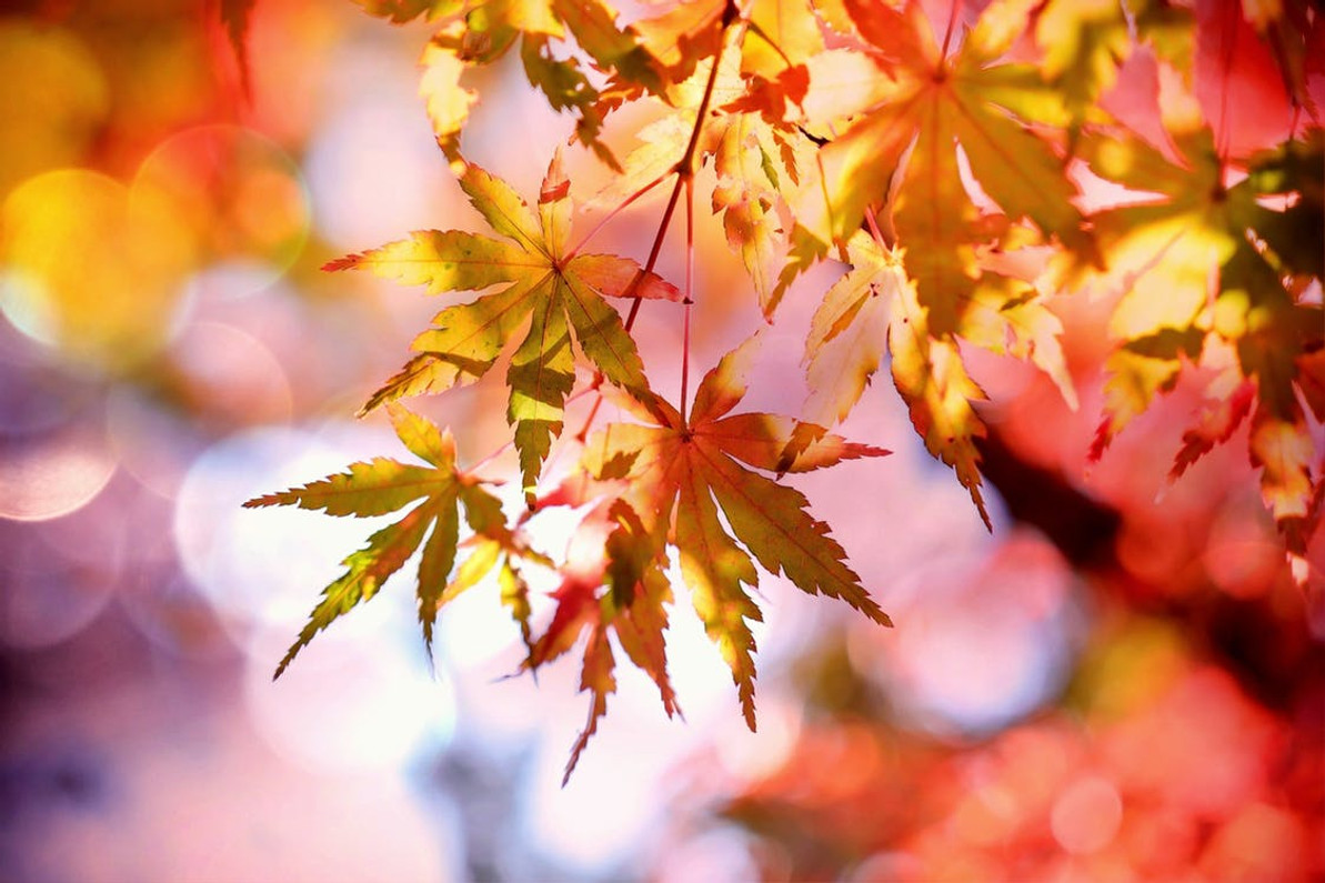 Out with Summer and In with Autumn