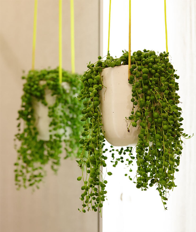 5 Indoor Plants We Love