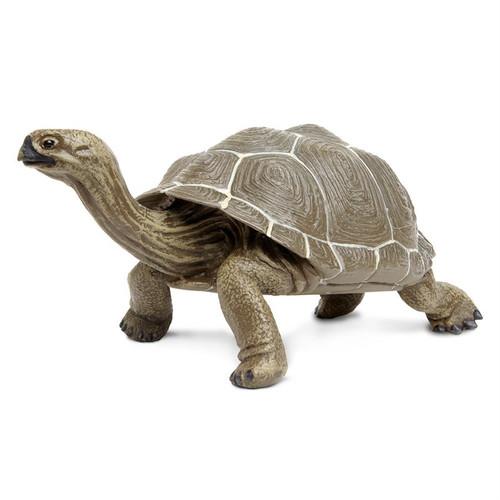 Tortoise Large Toy