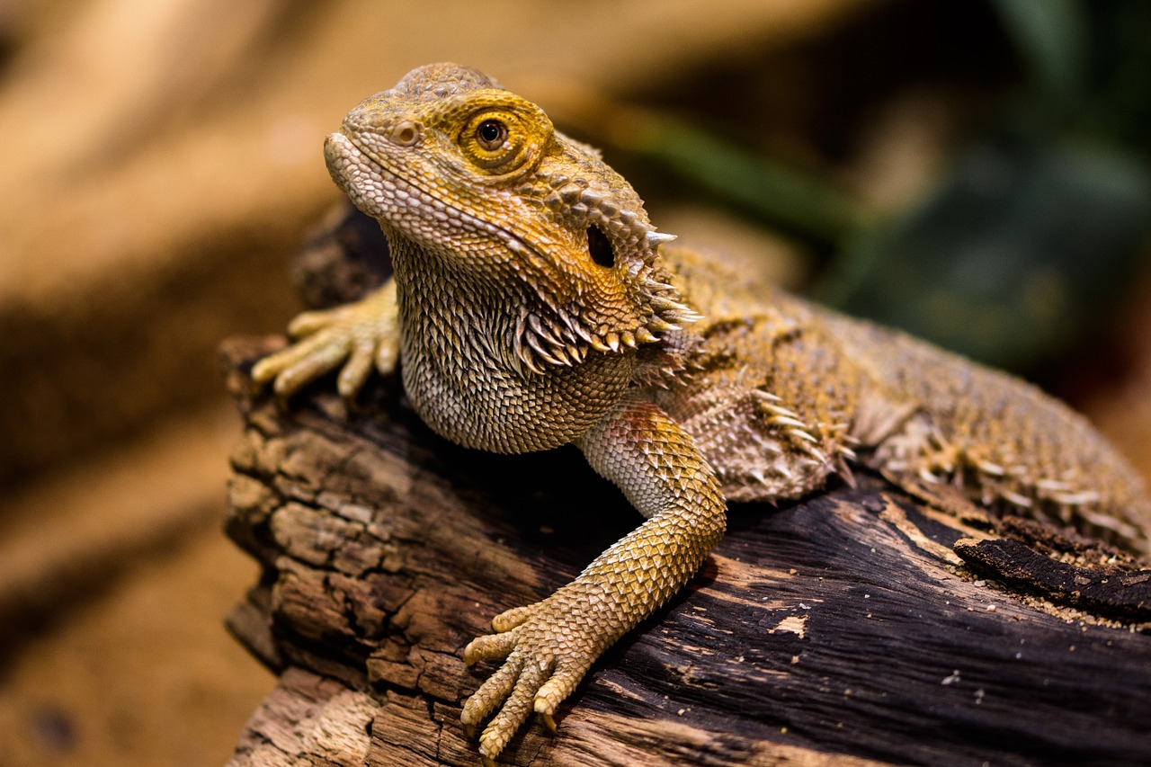 What to Feed Your Bearded Dragon - The Tye-Dyed Iguana