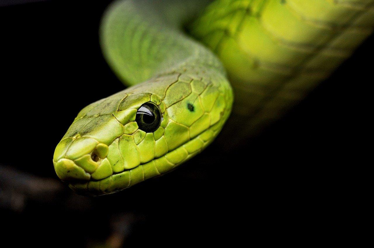 snake-3979601-1280.jpg