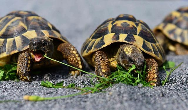 turtles-3613293-640.jpg
