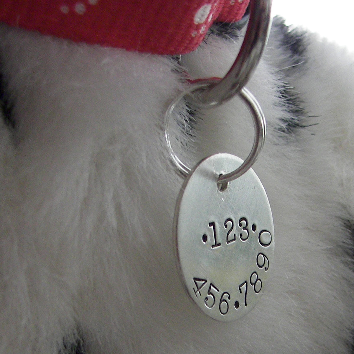 My Kitty Personalized Pet Tag with phone number on back