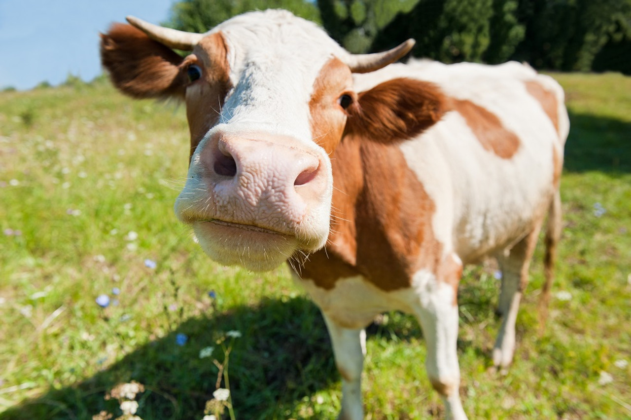 Why Dairy is sabotaging your skin and causing acne