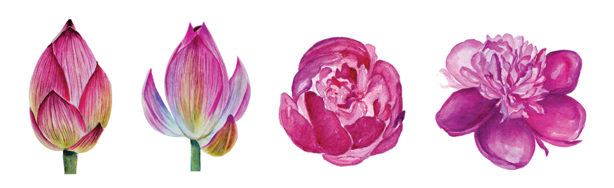 flower-set-png.png