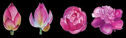 flower-set-smaller.png