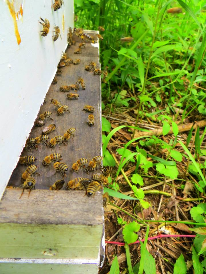 mollys-hive-and-bees.jpg