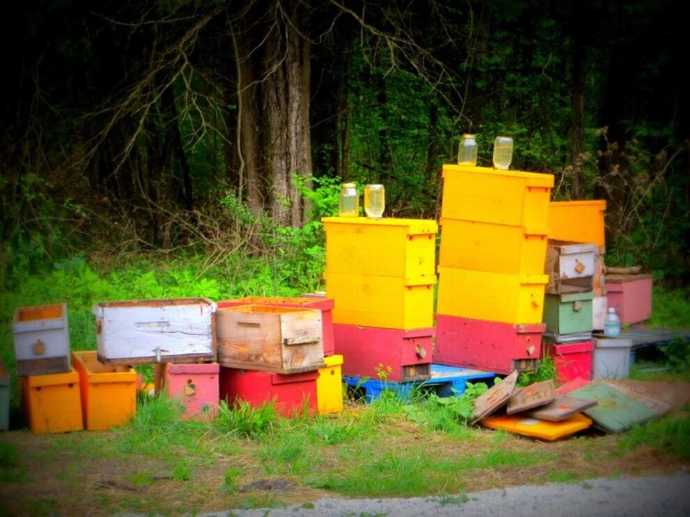 rainbow hives
