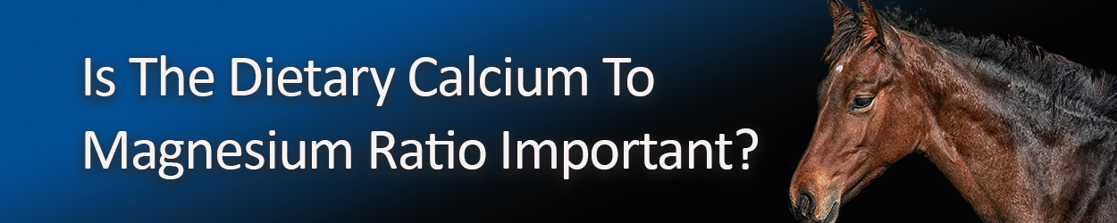 is-the-dietary-calcium-to-magnesium-ratio-important-copy.png