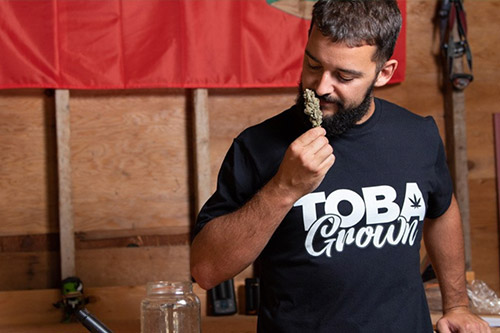 The Tobagrown Project Challenges Manitoba's Homegrown Cannabis Prohibition