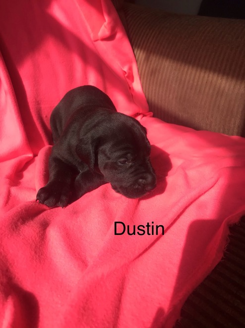 """M2 """"Dustin""""  Haley and Blue's SOLD!"""