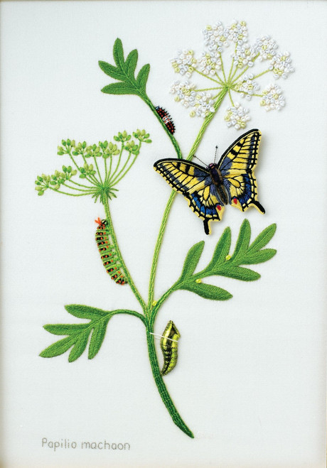 Lifecycle of the Swallowtail Butterfly