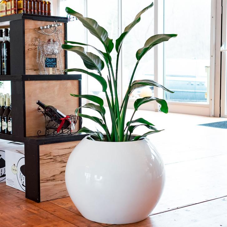Globe Spherical Planter Pot
