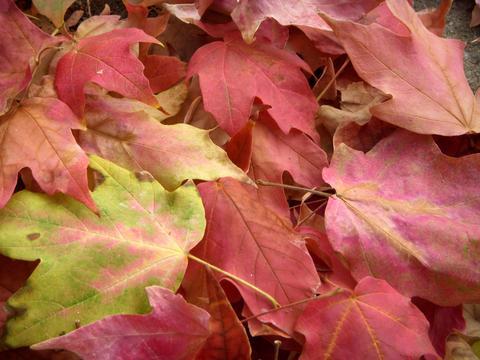 Fall planters leaves