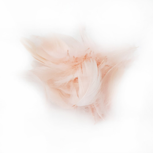 Decorative Feathers - Peach