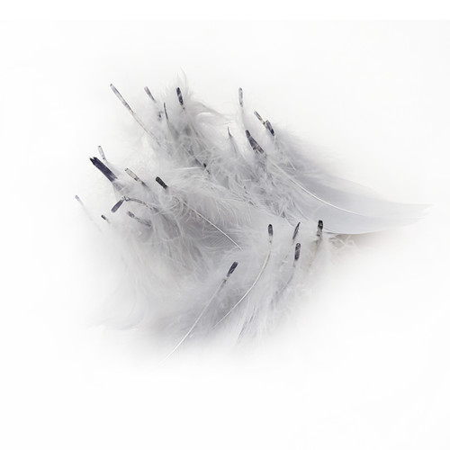 Decorative Feathers - Grey