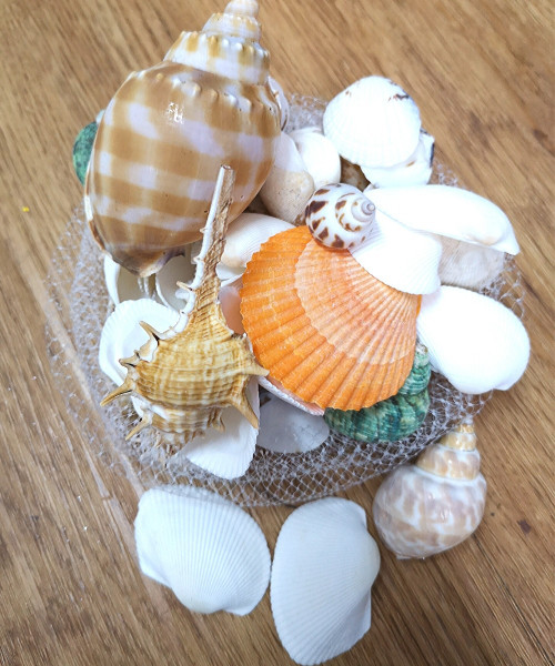 Decorative Natural Sea Shells - Assorted Design (130g/pack)