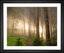 Sunbeams Through the Forest Fog