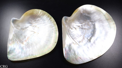 """Polished Mother of Pearl Shell Dish 5.5""""-6"""" (SHELL-MOP2)"""