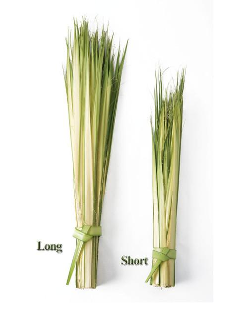"Palm Sunday Palm Strips - Long 24-36"", BAG/100"