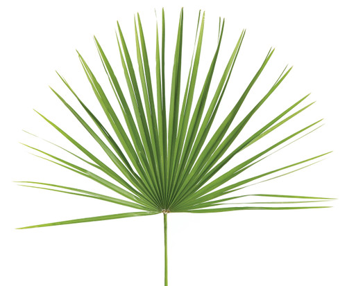 Palm Sunday Mediterranean Palm Fan - BAG/8